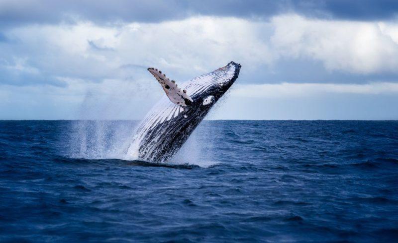 la baleine n'a pas de cancer