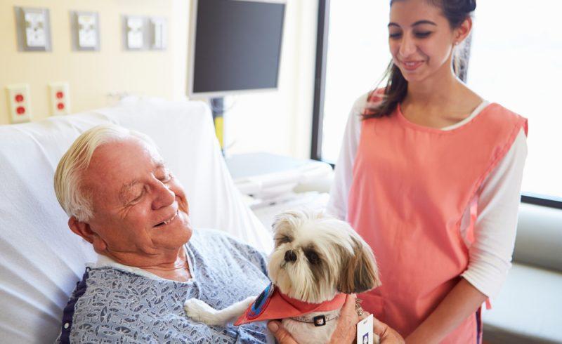 Petit chien visitant un homme a l'hopital pour faire de la thérapie canine
